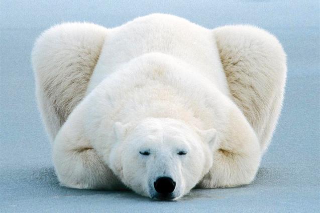 La fin de l'hibernation.